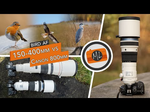 Olympus 150-400mm Pro Review (vs Canon 800mm) + Bird Detection AF Review