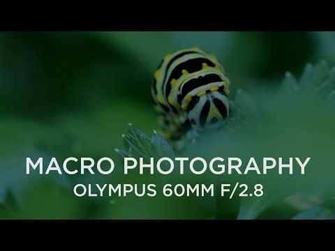 Shooting Macro with the Olympus 60mm f/2.8